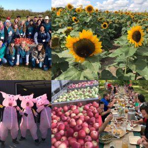 Goofy pigs, Apples, Corporate Event, FFA, Sunflowers