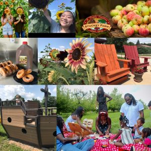 Giant Chairs, Donuts, Picnics, Pirate Ship, Sunflowers